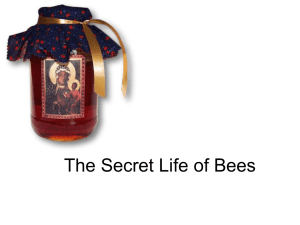 secret life of bees study guide chapter 13