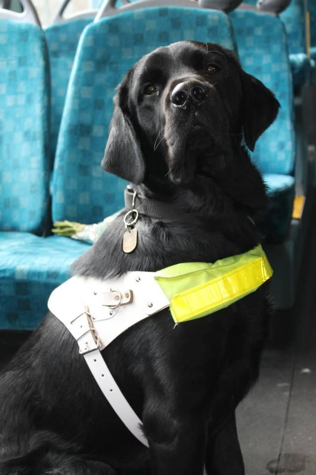 what are the major campaigns for guide dogs