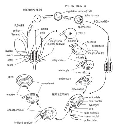 year 12 vce biology subject guide