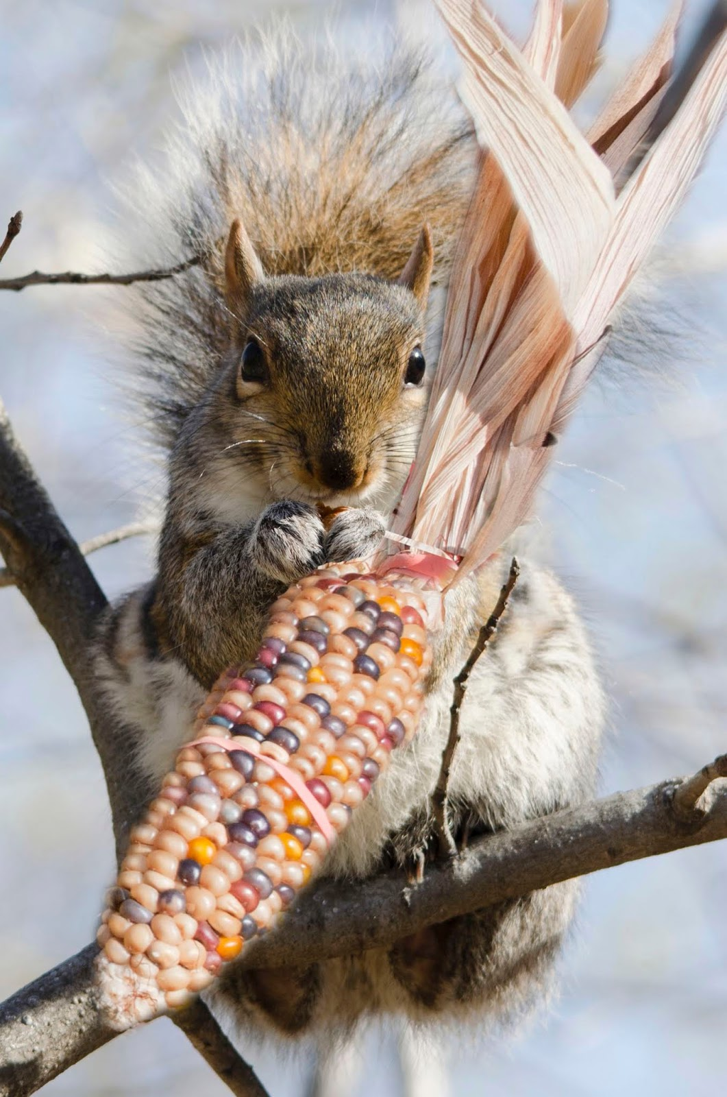 a guide to urban wildlife ebay
