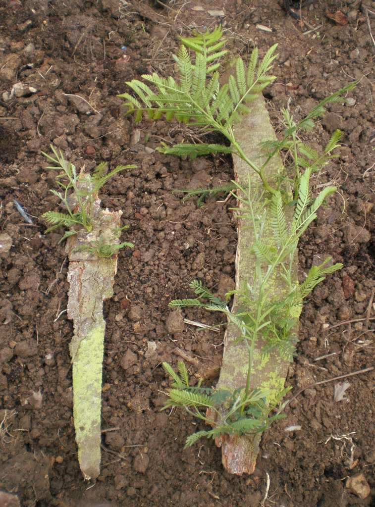 louisiana fruit tree planting guide